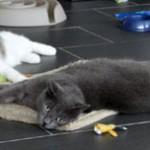 Bambou, quel beau chat