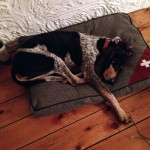 Valco après adoption