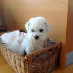 Vasco, chien